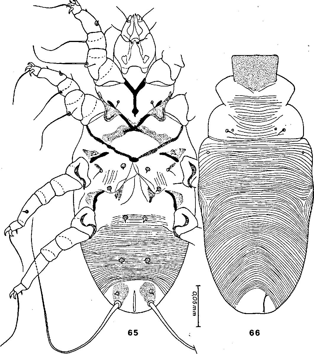 figure 65—66