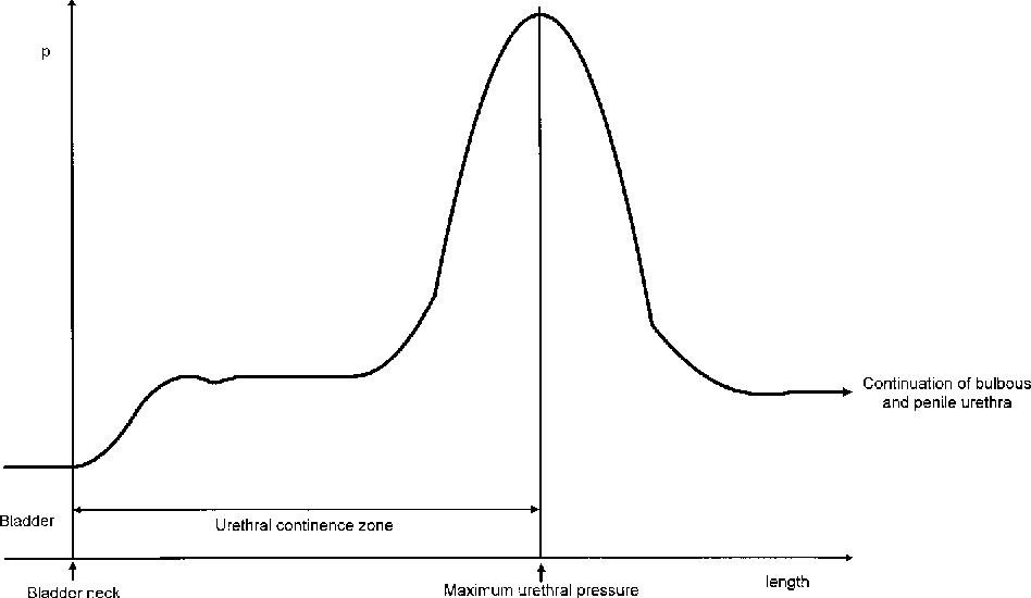 The standardization of terminology in neurogenic lower