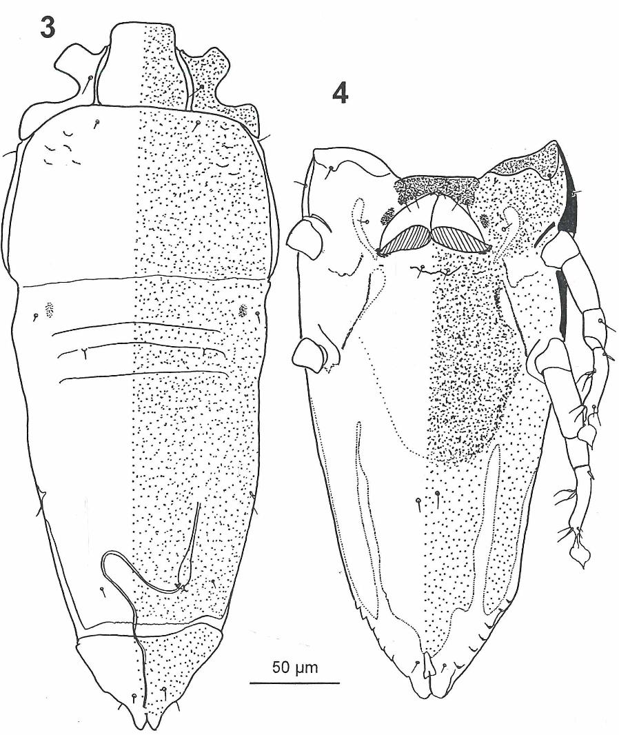 figure 3-4