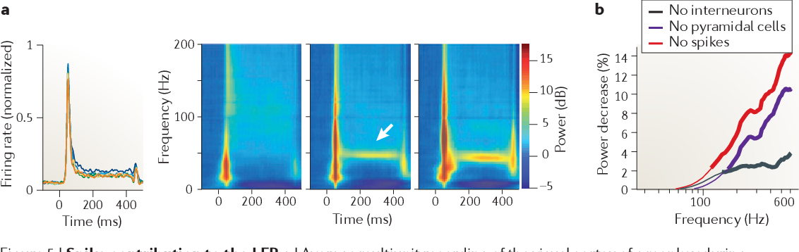 Figure 5 | Spike contribution to the LFP. a | Average multiunit recording of the visual cortex of a monkey during presentation of a static grating (0 to 400ms) at six different sizes, shown in different colours (left panel). Also shown are timefrequencypower difference plots demonstrating the difference between baseline power (in dB) and power in response to increasing size stimuli (right panel). Note the increase in wide-band power (at ~50ms) with increased firing and synchrony of units after stimulus onset. The arrow indicates sustained gamma frequency oscillation. b | The effect of local field potential (LFP) de-spiking on spectral power. The figure shows the percentage change of power at different frequencies after de-spiking the LFP. Thick lines indicate the frequencies at which there was a significant difference between the original LFP power and the power of the LFP after removing interneuron spikes (No interneurons), pyramidal cell spikes (No pyramidal cells) or all spikes (No spikes). Part a is reproduced from REF. 162. Part b is reproduced, with permission, from REF. 111 (2012) Society for Neuroscience.