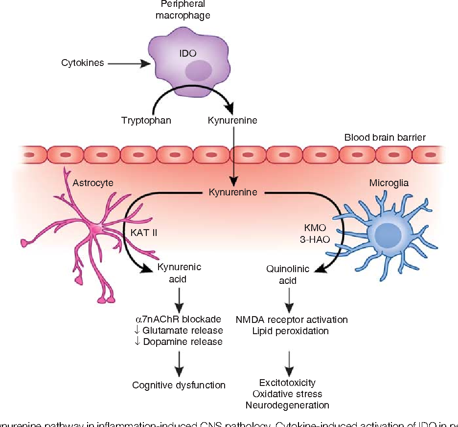 Figure 2 from Psychoneuroimmunology Meets