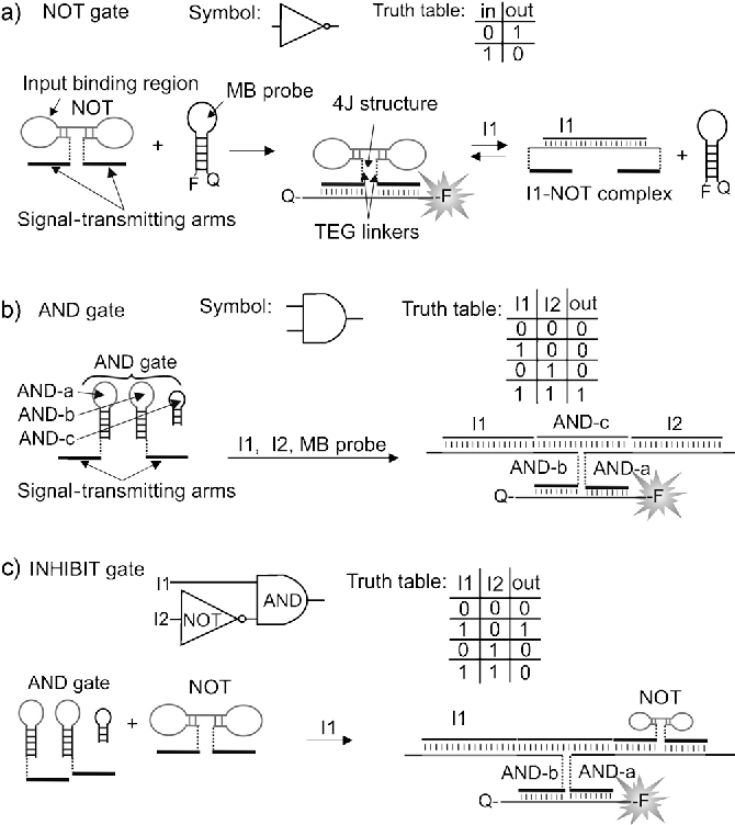 Figure 1 from Connectable DNA logic gates: OR and XOR logics