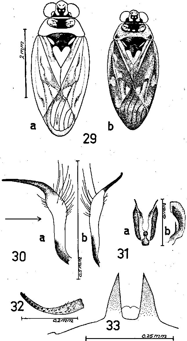figure 29-33