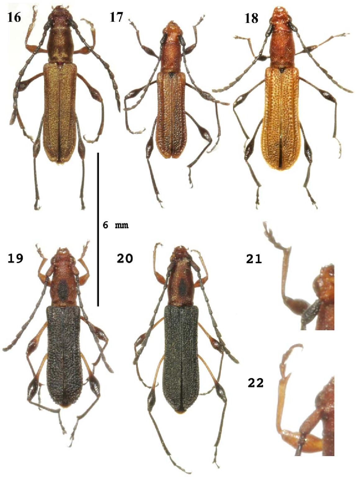 figure 16–22