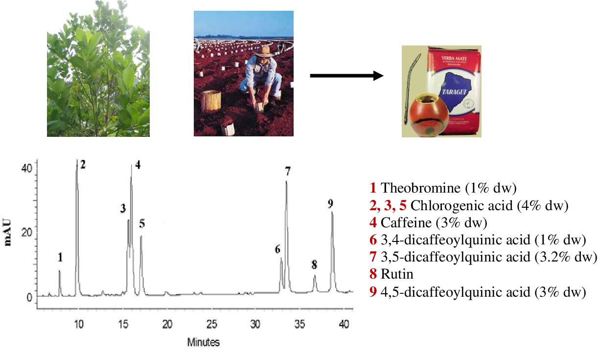 Anti Inflammatory And Anti Colon Cancer Potential Of Yerba Mate Ilex Paraguariensis St Hilaire Bioactive Constituents Semantic Scholar