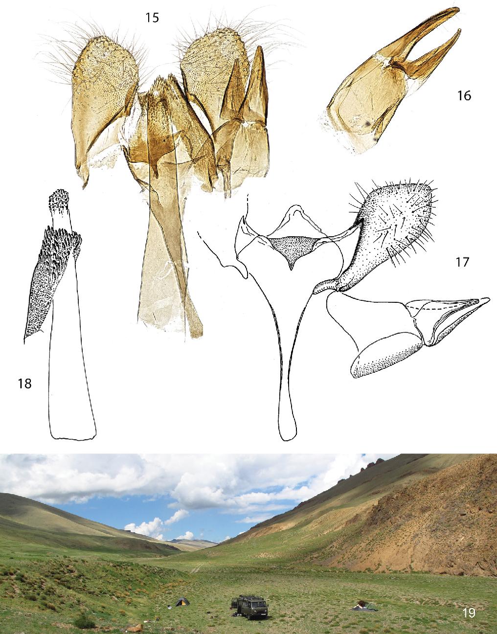 figure 15–19