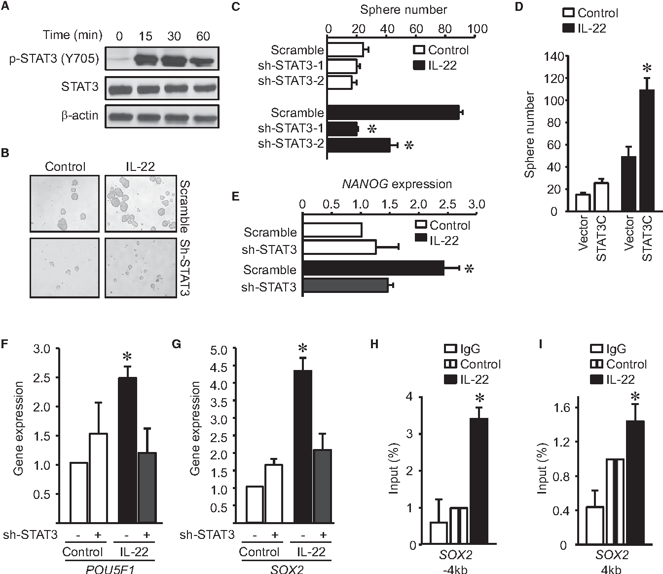 Figure 3 From Il 22 Cd4 T Cells Promote Colorectal Cancer Stemness Via Stat3 Transcription Factor Activation And Induction Of The Methyltransferase Dot1l Semantic Scholar