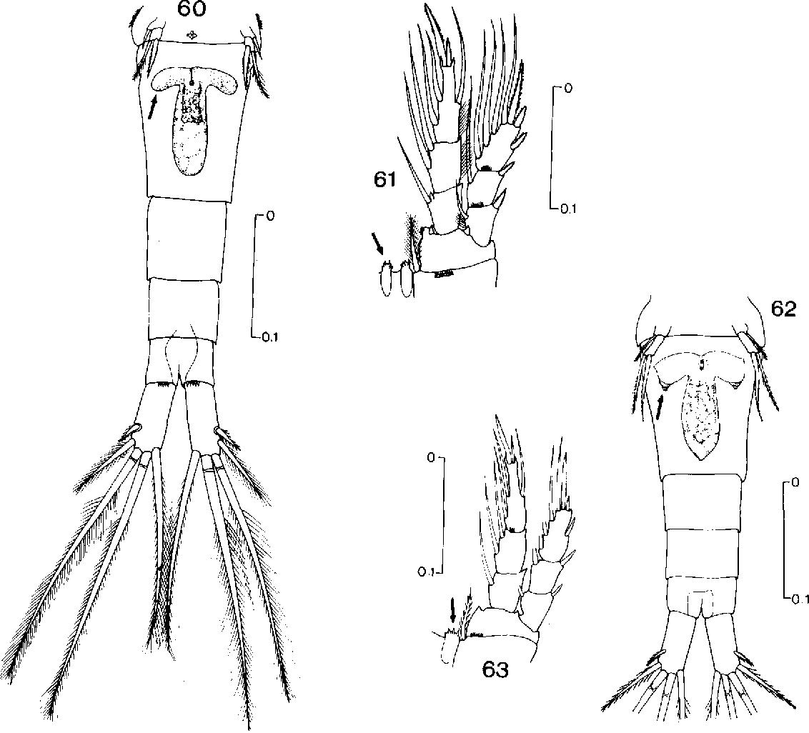figure 60-63