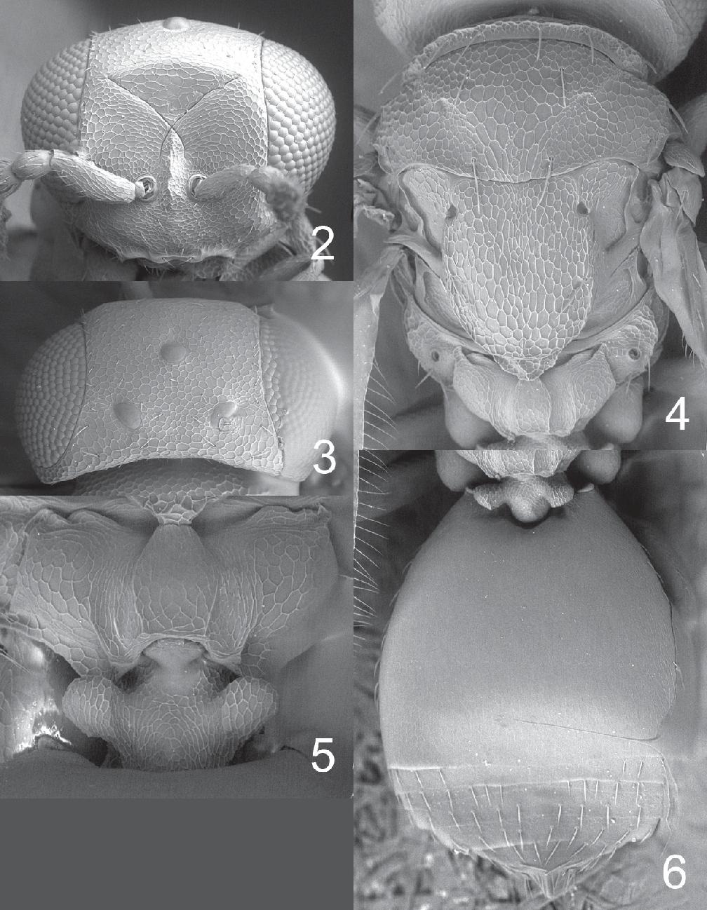 figure 2–6