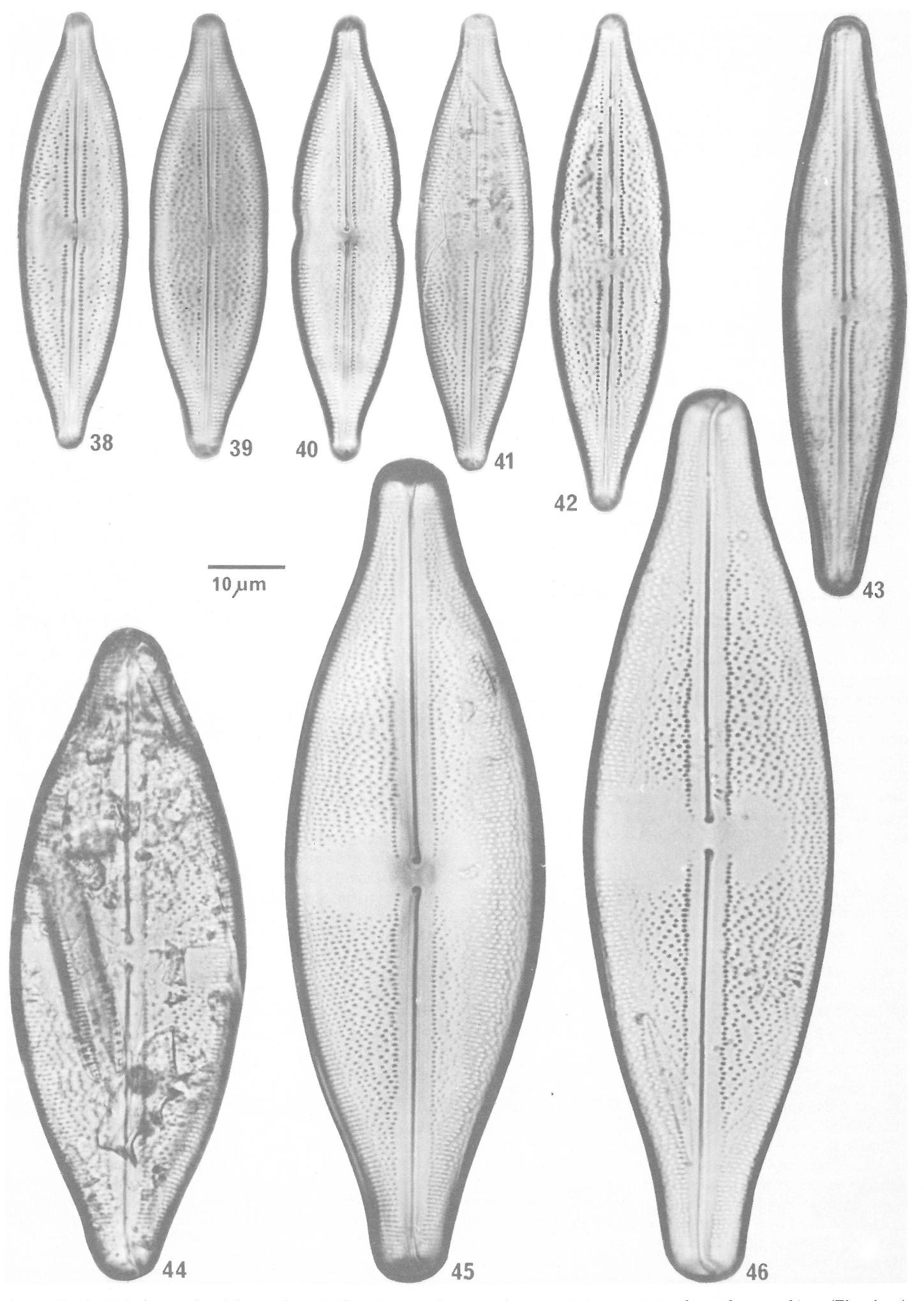 figure 38-46