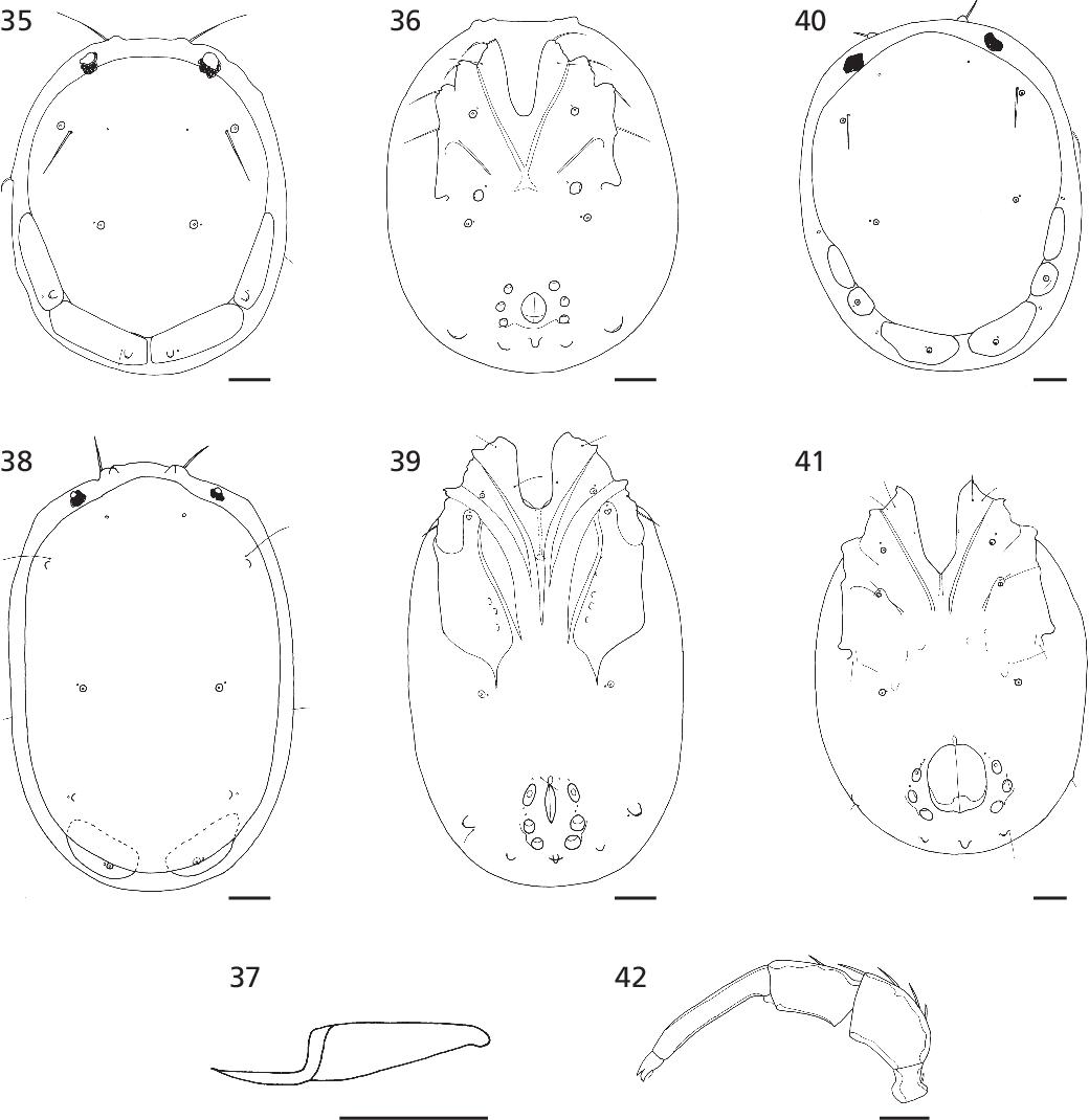figure 35-42