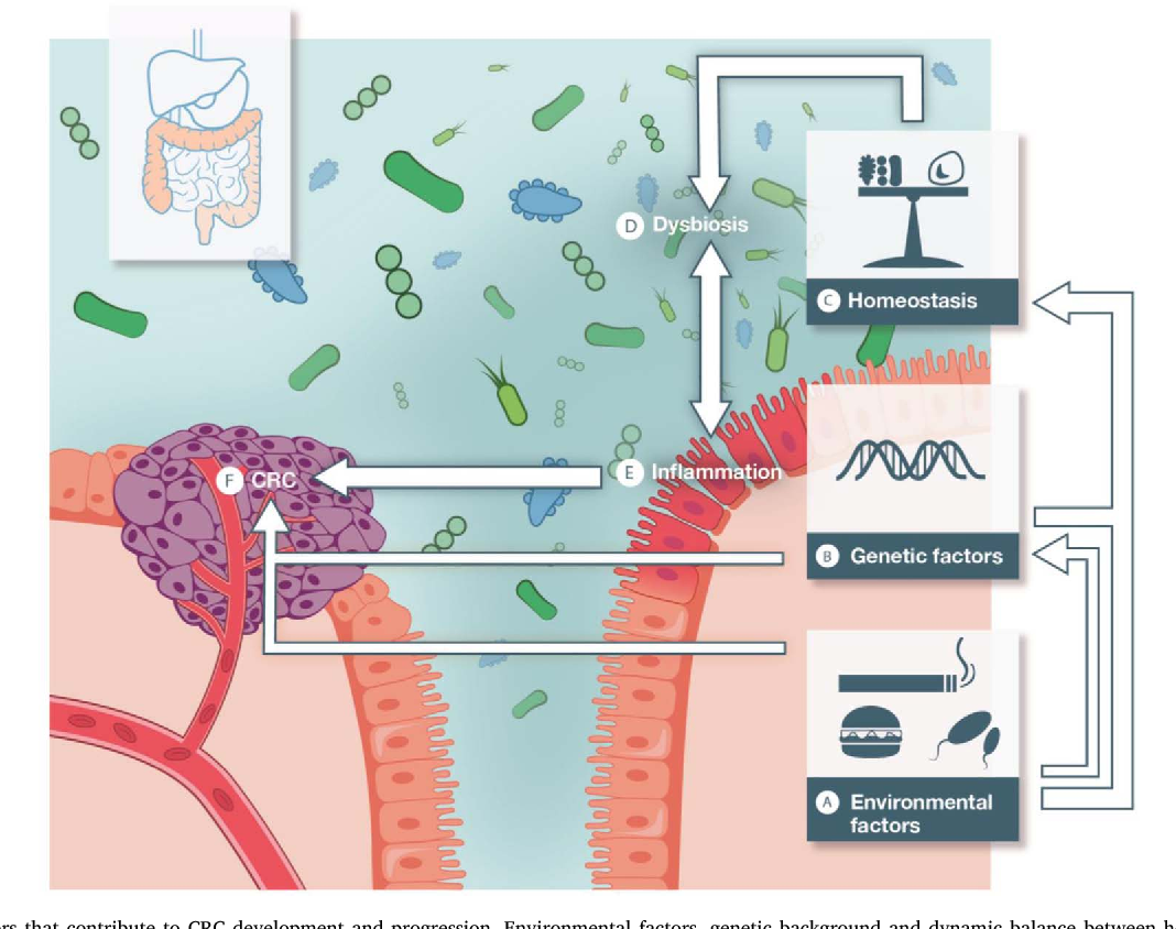 Figure 1 From Microbiome And Colorectal Cancer Unraveling Host Microbiota Interactions In Colitis Associated Colorectal Cancer Development Semantic Scholar