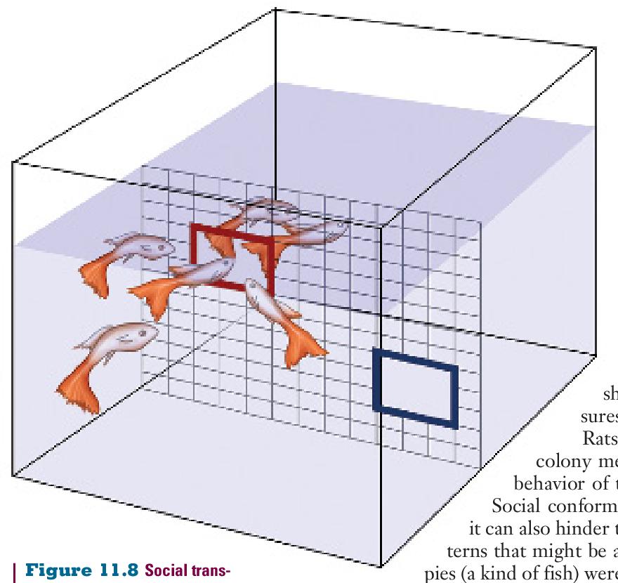 figure 11.8