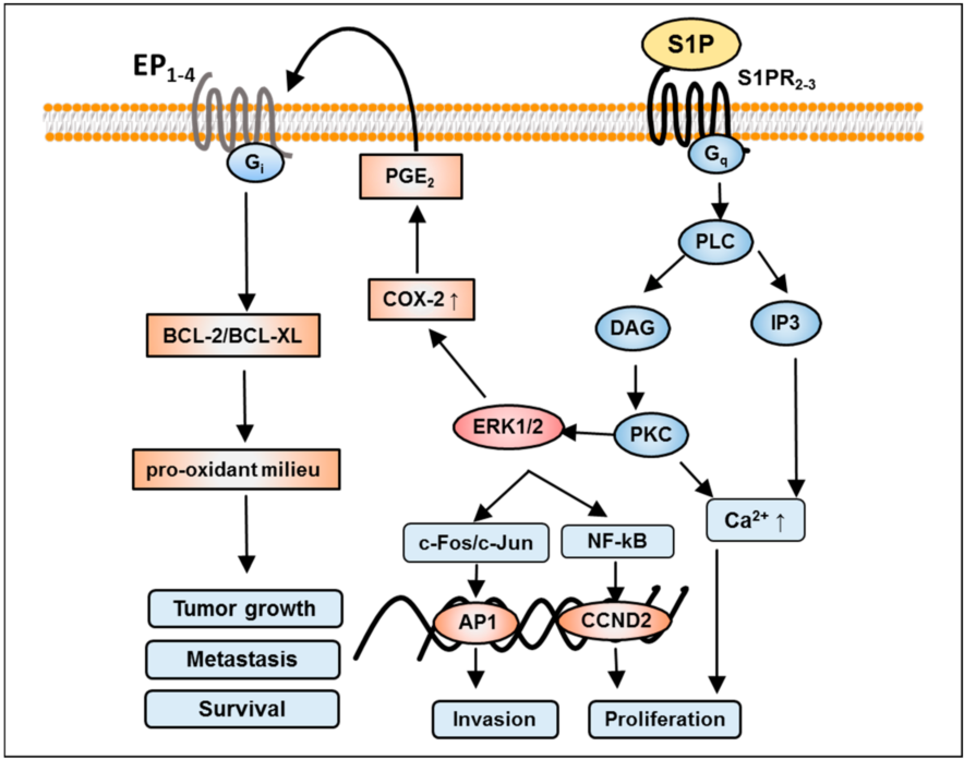 magasin en ligne 81e15 bb09f Figure 4 from Sphingosine 1-Phosphate (S1P) Signaling in ...