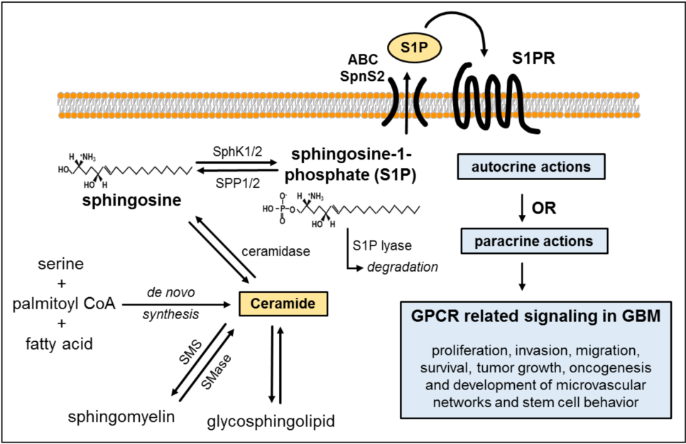 tout neuf 9a327 3e746 Figure 1 from Sphingosine 1-Phosphate (S1P) Signaling in ...