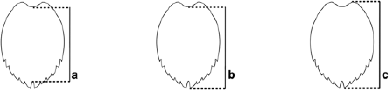 Figure 1. The anterior and posterior pairs of anatomical points for three carapace length measurements. (a) Minimum straight carapace length (SCLmin) and minimum curved carapace length (CCLmin) are measured from the anterior point at midline (nuchal scute) to the posterior notch at midline between the supracaudals. (b) Straight carapace length notch to tip (SCLn-t) and curved carapace length notch to tip (CCLn-t) are measured from the anterior point at midline (nuchal scute) to the posterior tip of the supracaudals. (c) Maximum straight carapace length (SCLmax) is measured from the anterior edge of the carapace to the posterior tip of the supracaudals. Anterior and posterior locations must be on the same side of the carapace.
