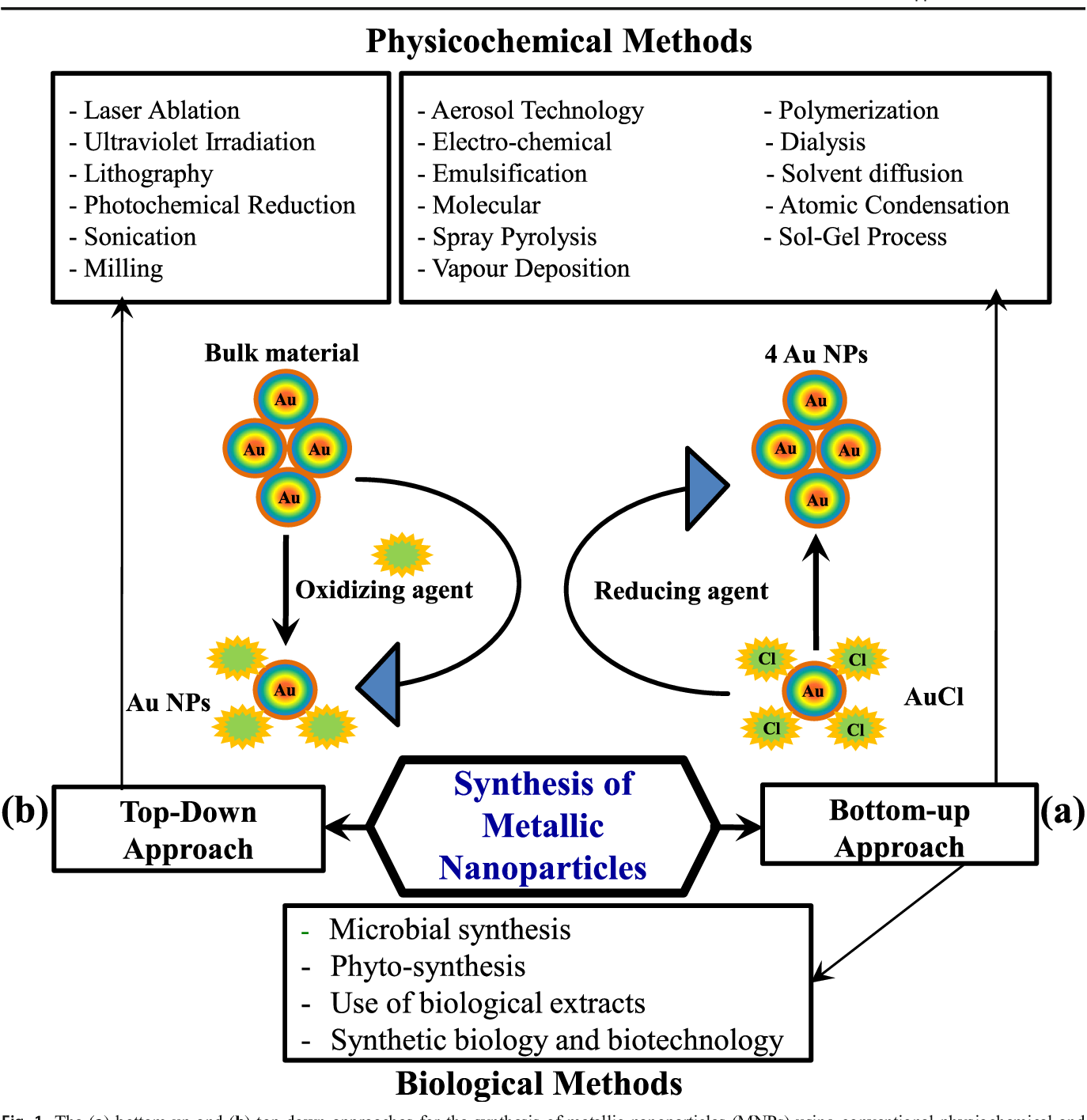 Biological synthesis of metallic nanoparticles (MNPs) by