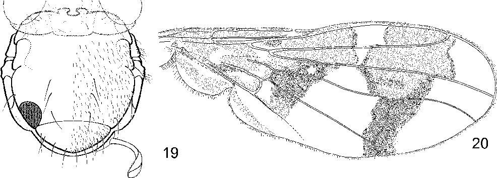 figure 19—20