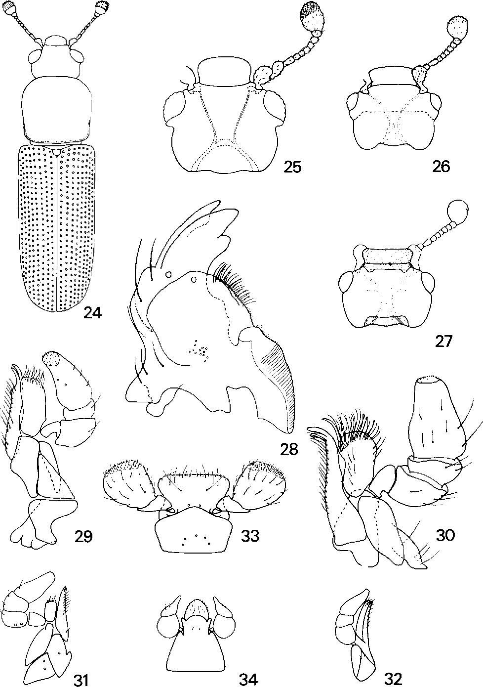 figure 24-34