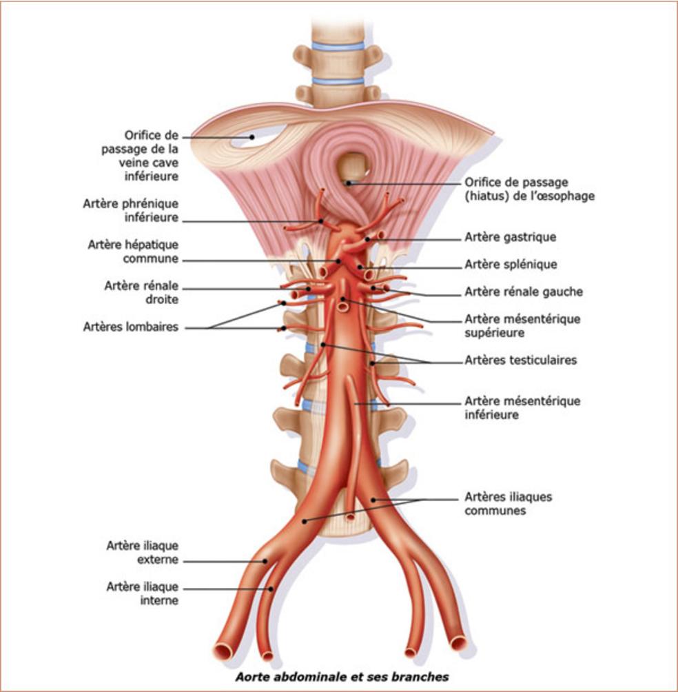 PDF] Complications respiratoires graves en post-opératoire de ...