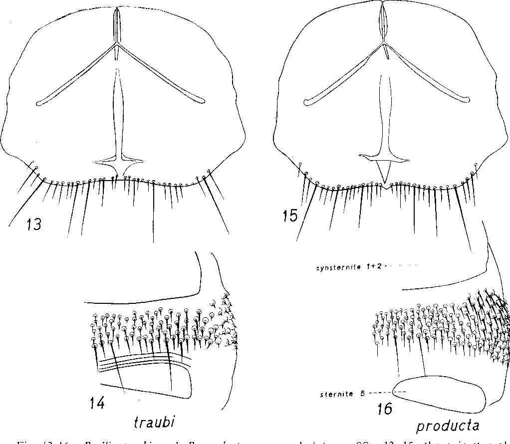 figure 13-16