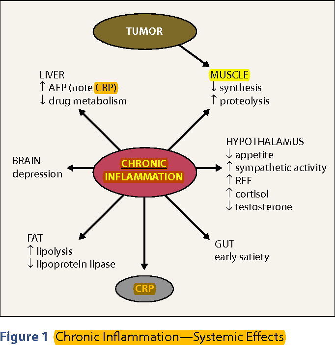 PDF] Cancer cachexia and targeting chronic inflammation: a