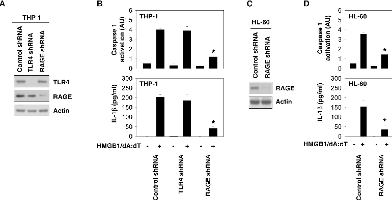 Figure 3. RAGE is required for HMGB1-DNA complex-mediated inflammasome activation