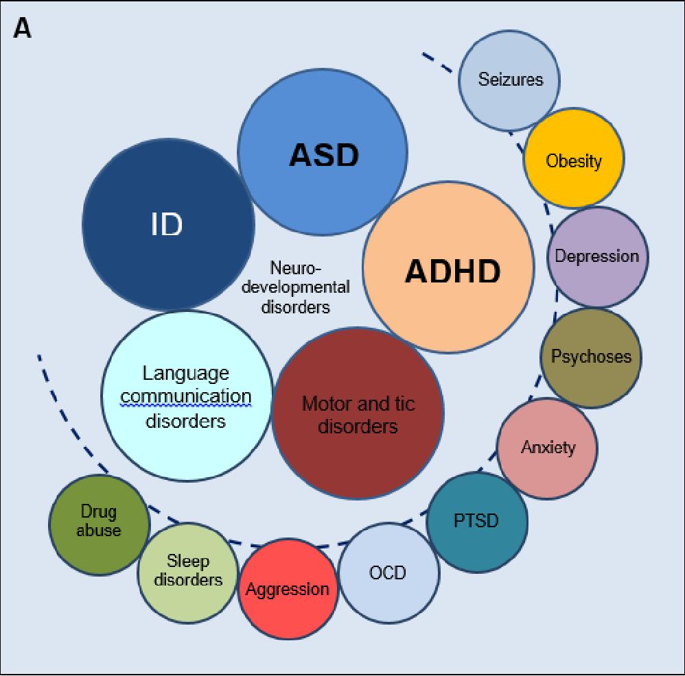 Essay on autism spectrum disorder