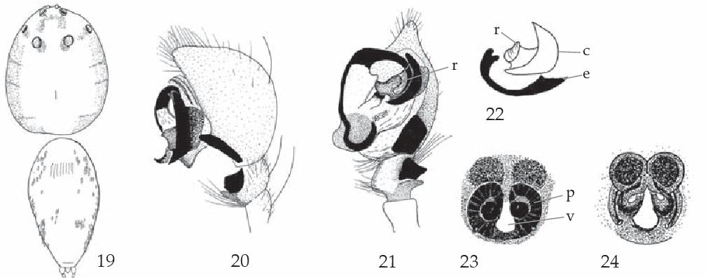 figure 19-24