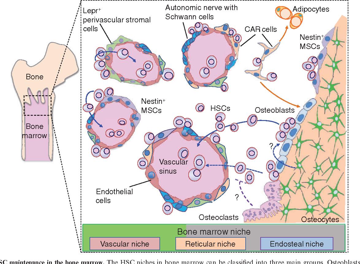 Figure 2 from Immunology and bone  - Semantic Scholar