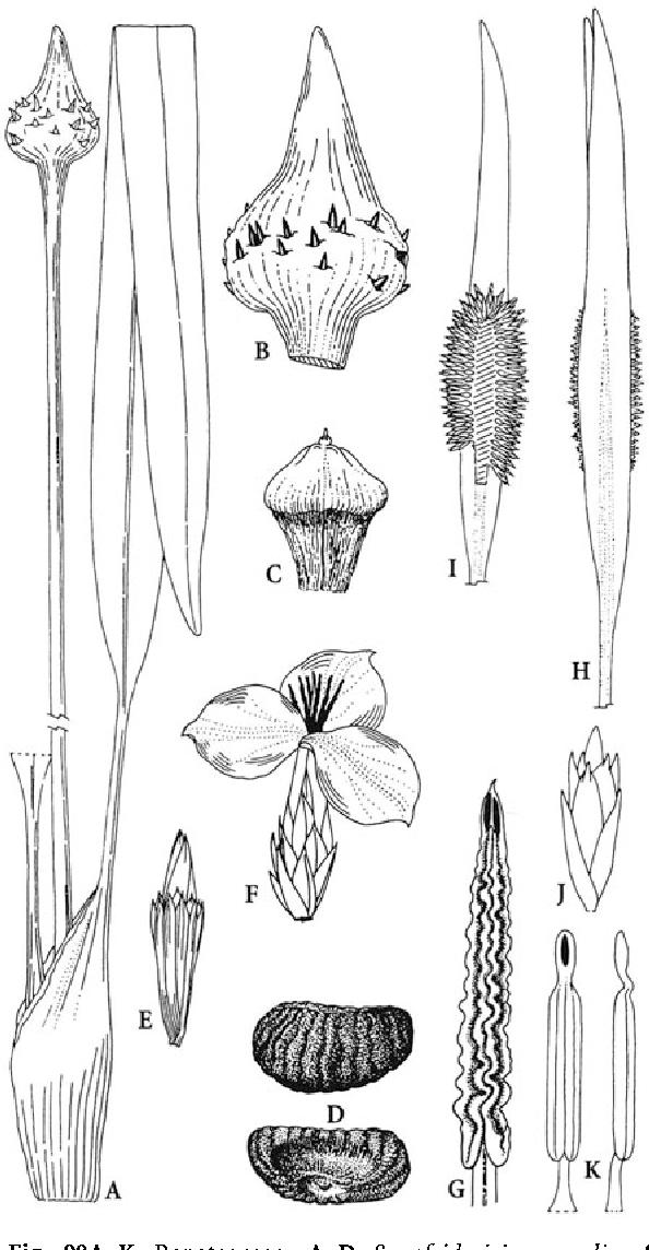 figure 98