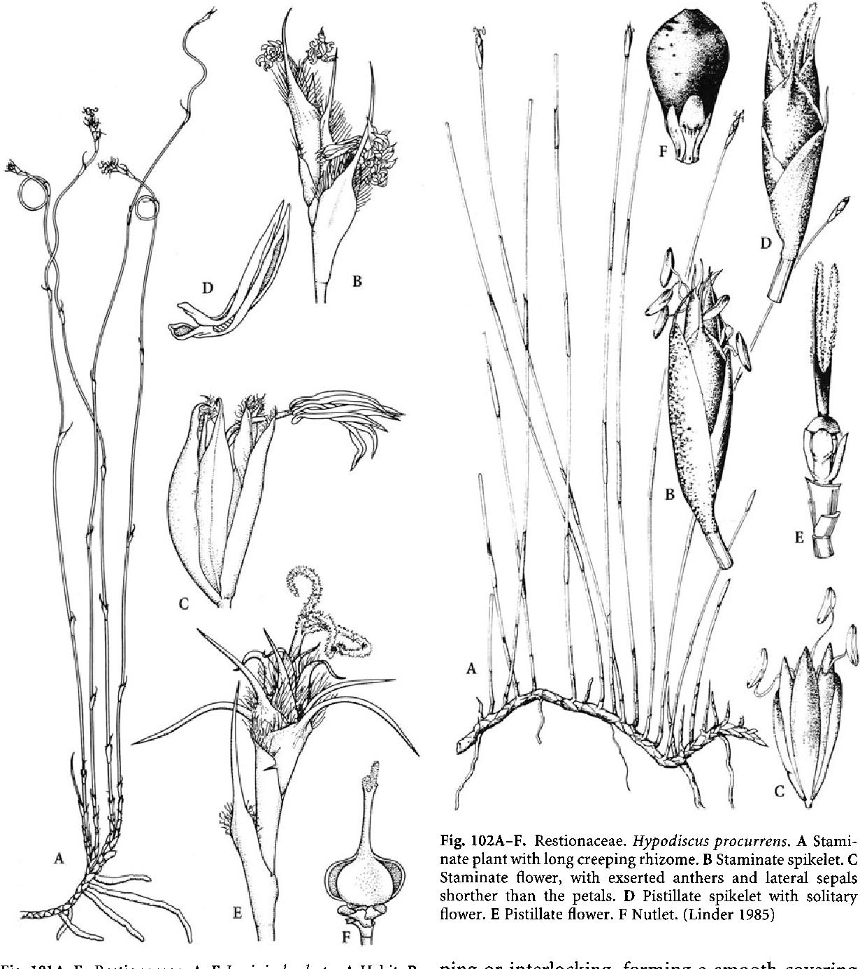 figure 102