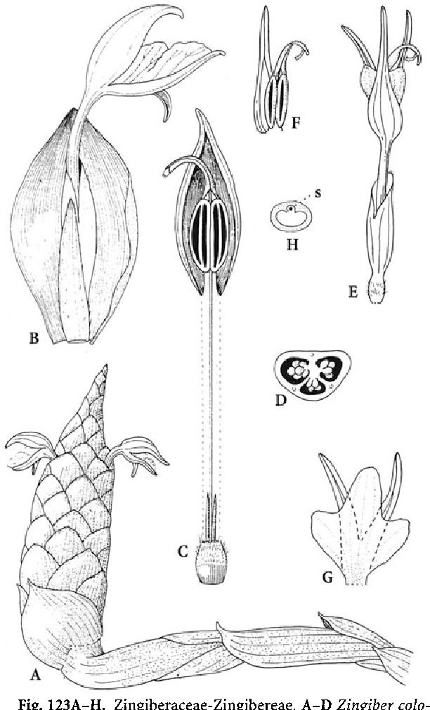 figure 123