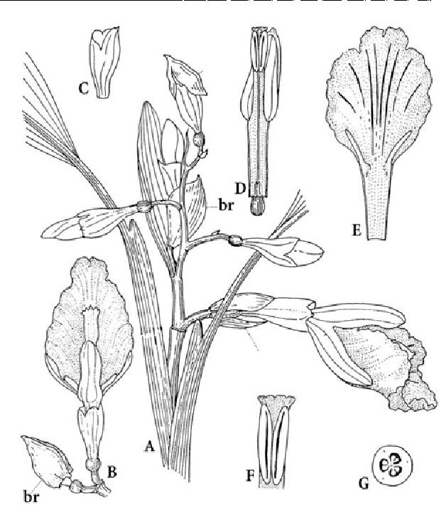 figure 124