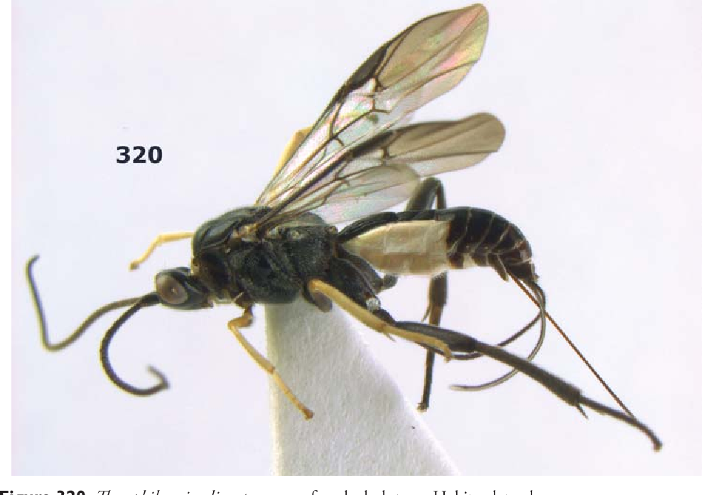 figure 320