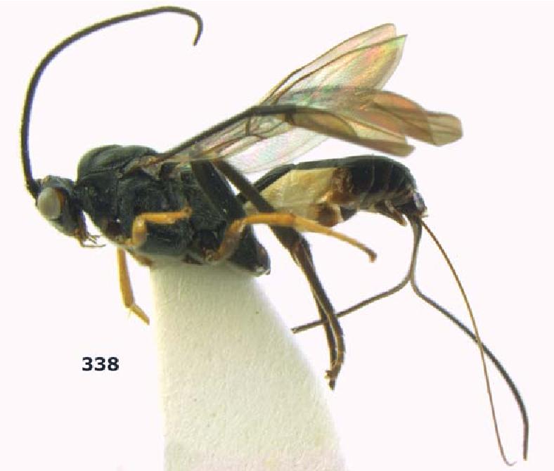 figure 338