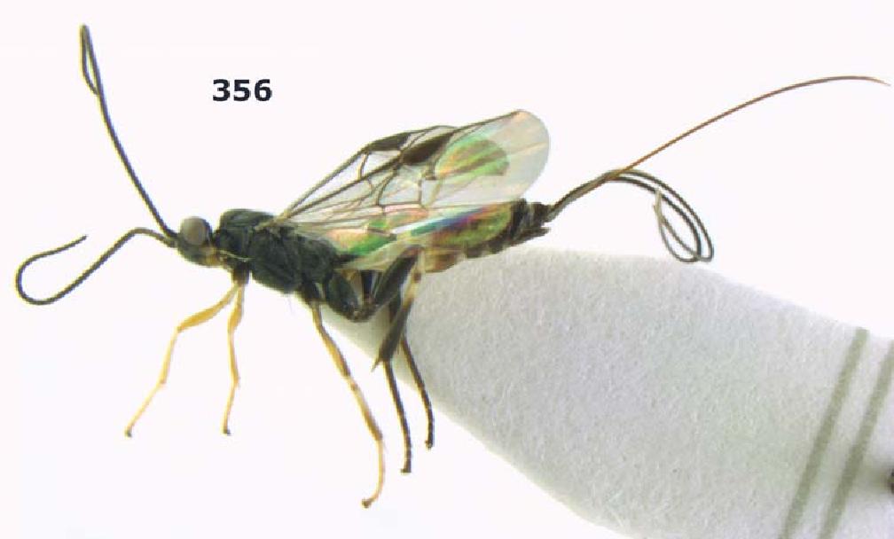 figure 356