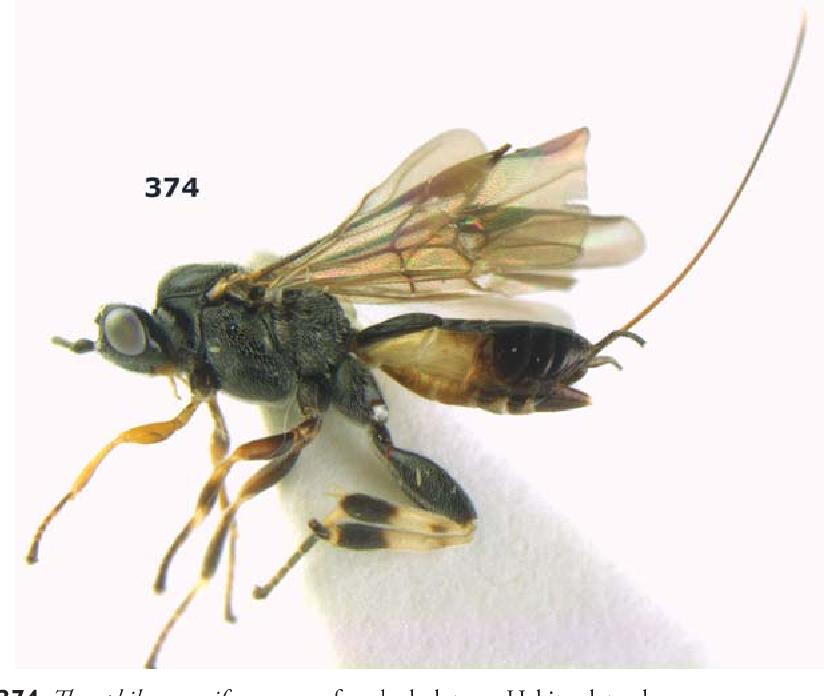 figure 374