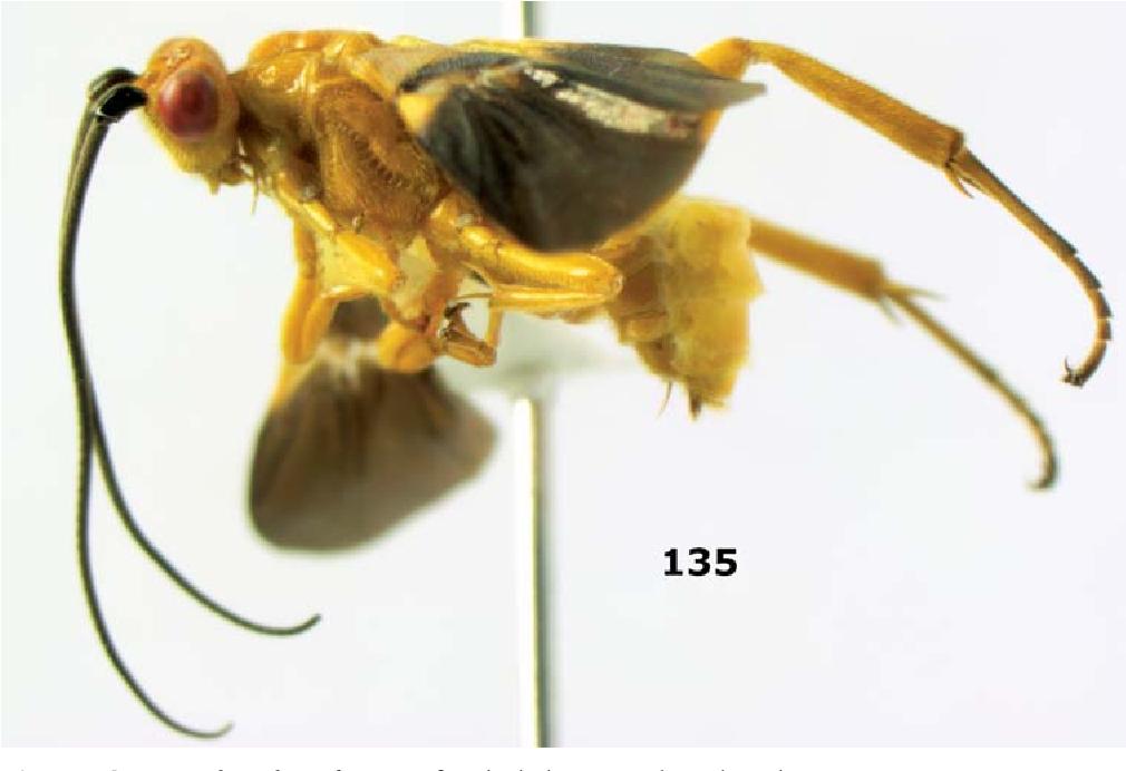 figure 135