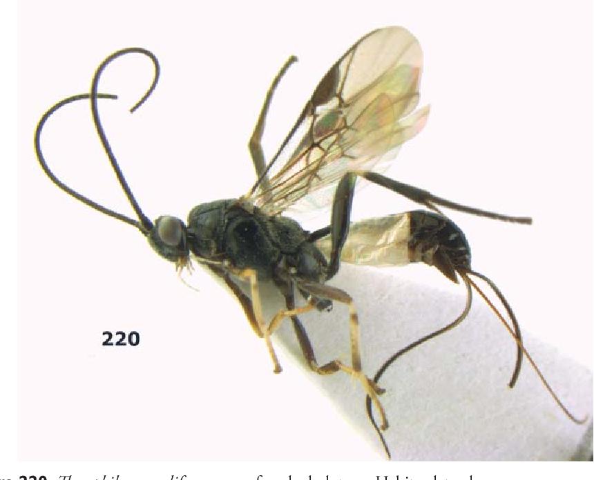 figure 220