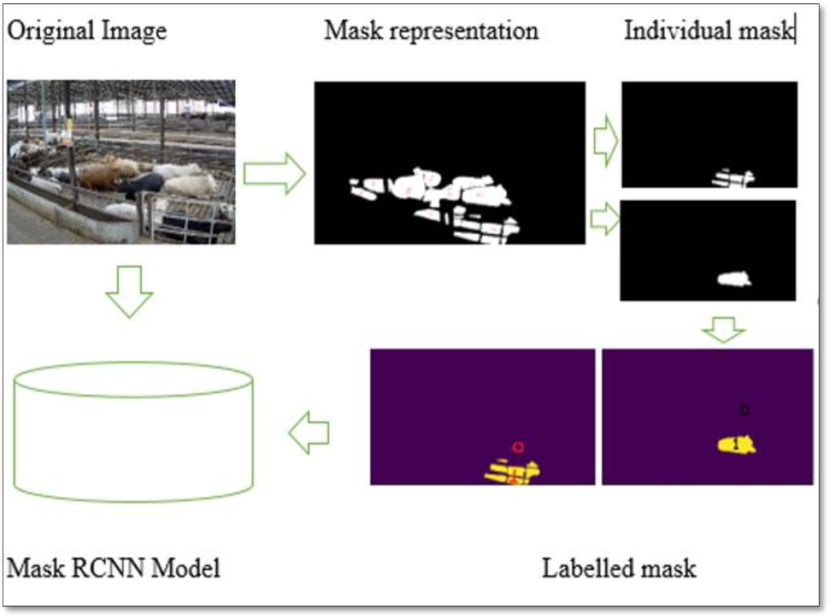 Figure 4 2 from Beef Cattle Instance Segmentation Using Mask