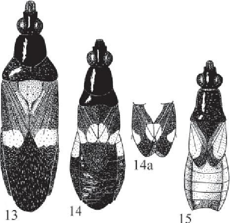 figure 13-15