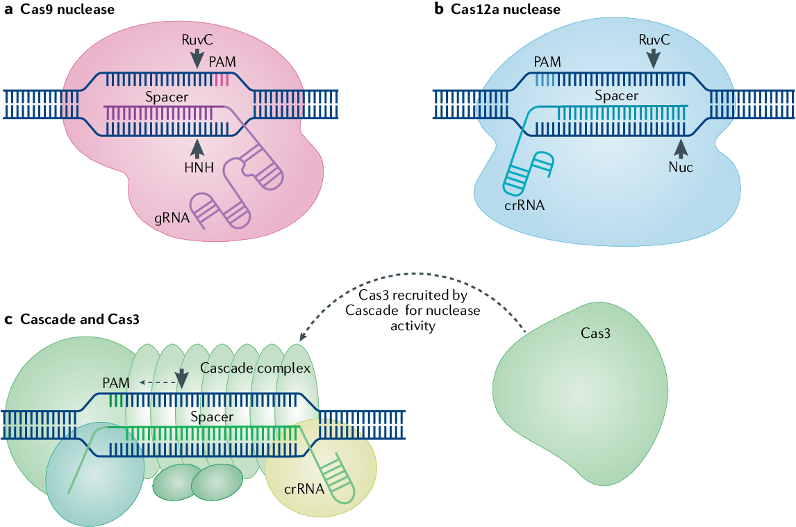 The next generation of CRISPR–Cas technologies and applications | Semantic  Scholar