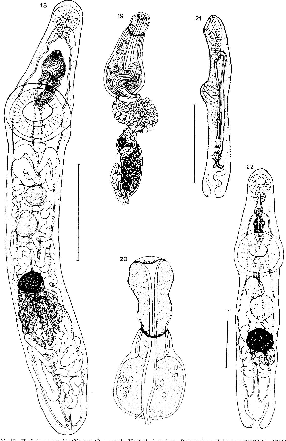 figure 18-22