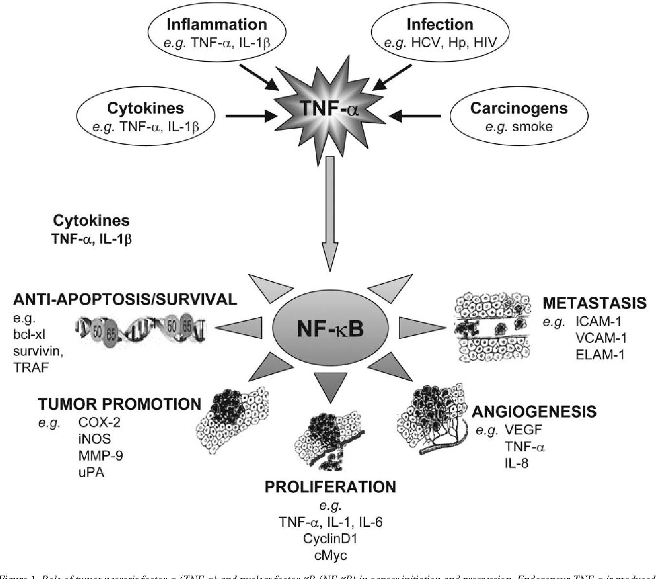 Figure 1 from Review  TNF/VEGF cross-talk in chronic