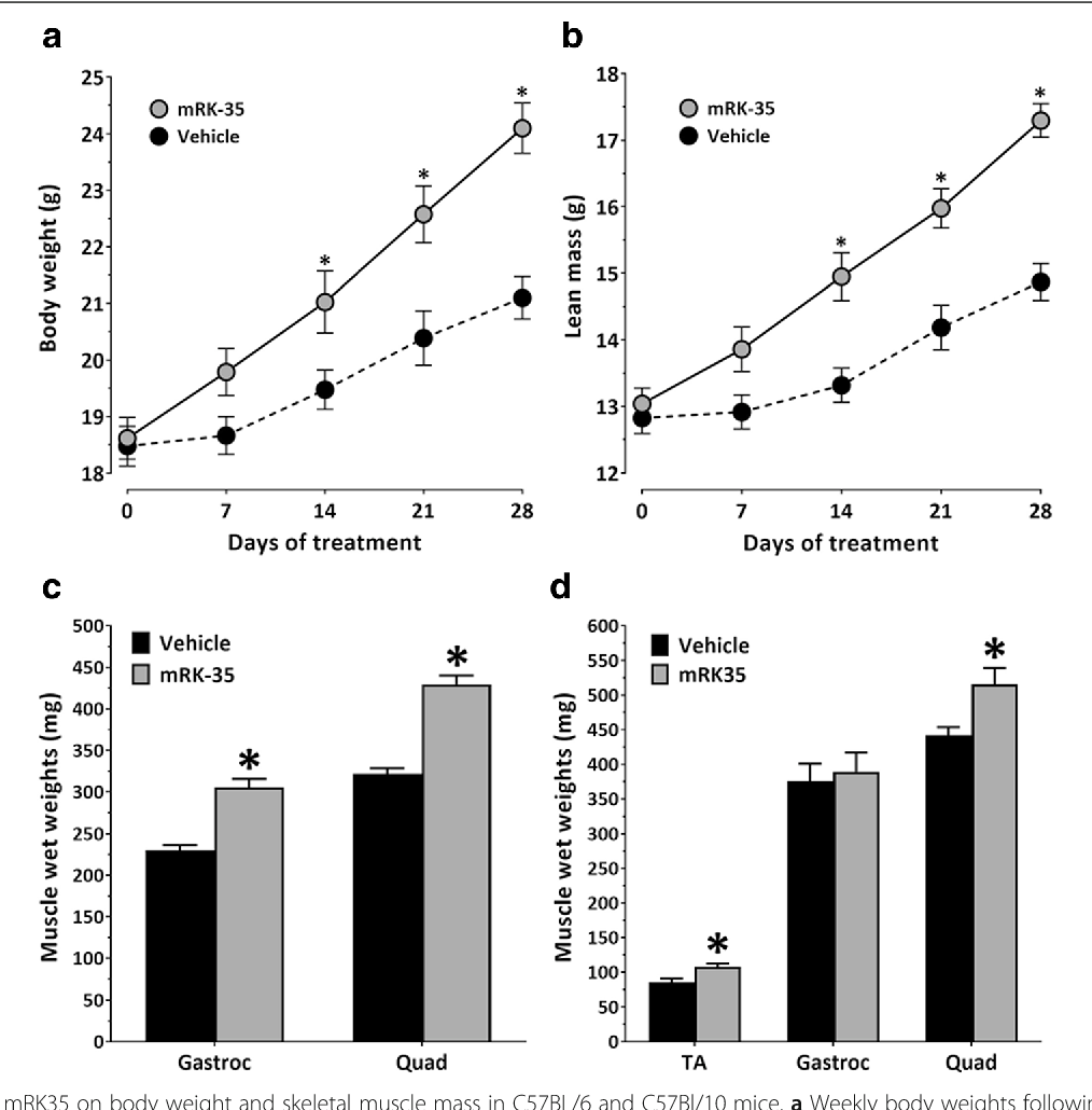 Figure 1 from A mouse anti-myostatin antibody increases