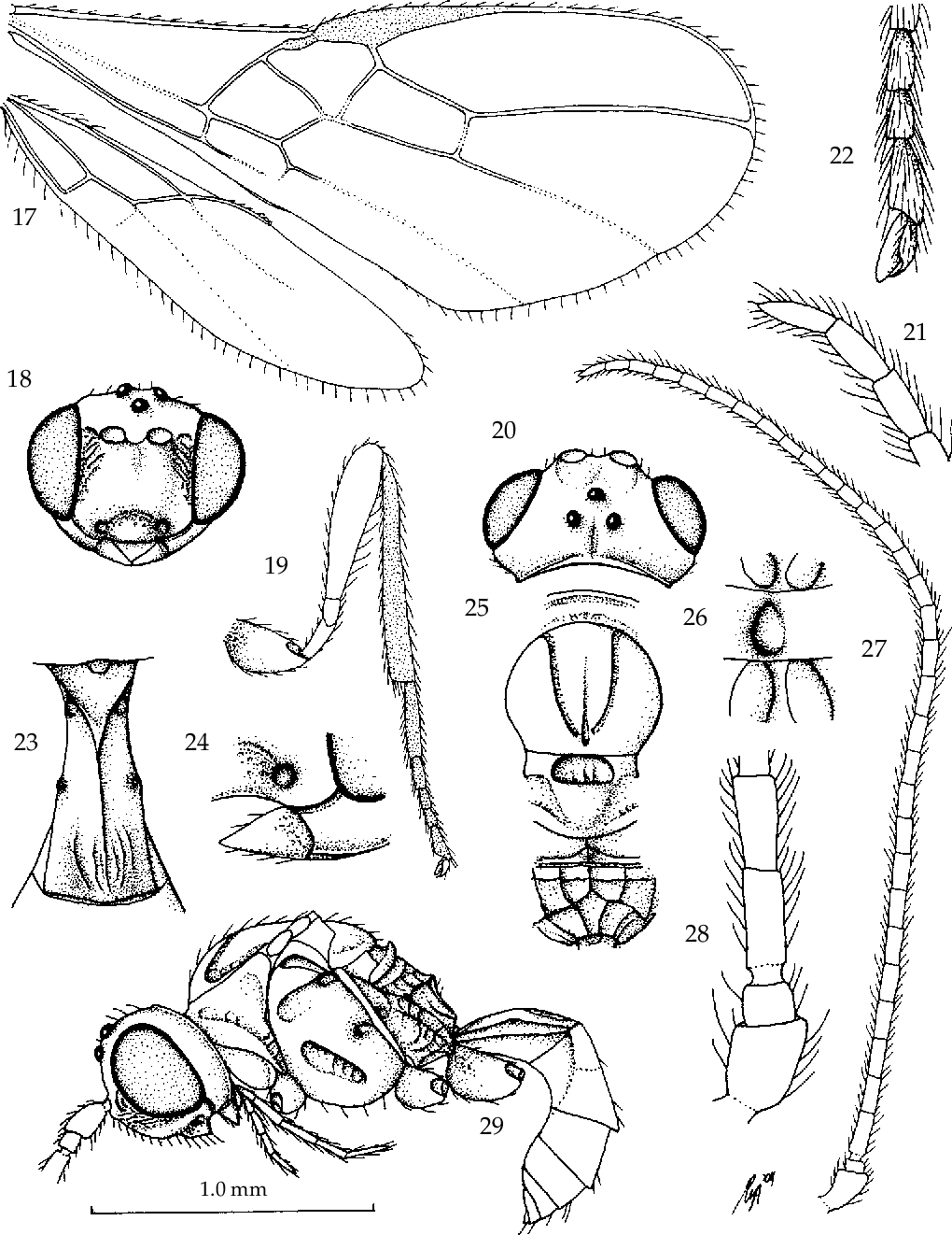 figure 17-29