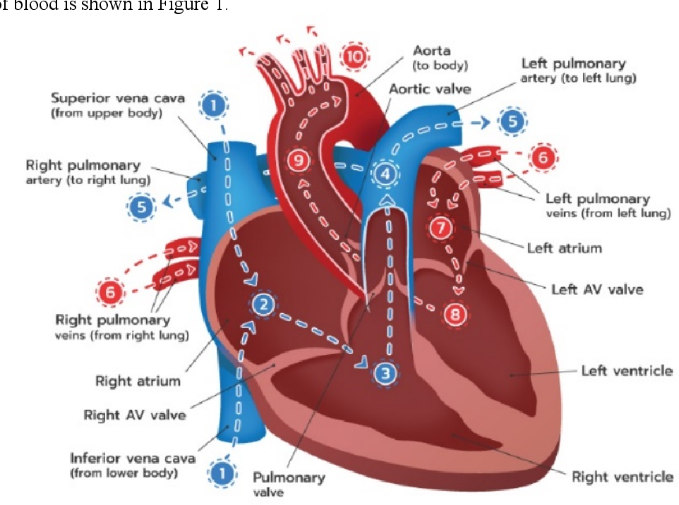 Pdf Augmented Reality To Teach Human Heart Anatomy And