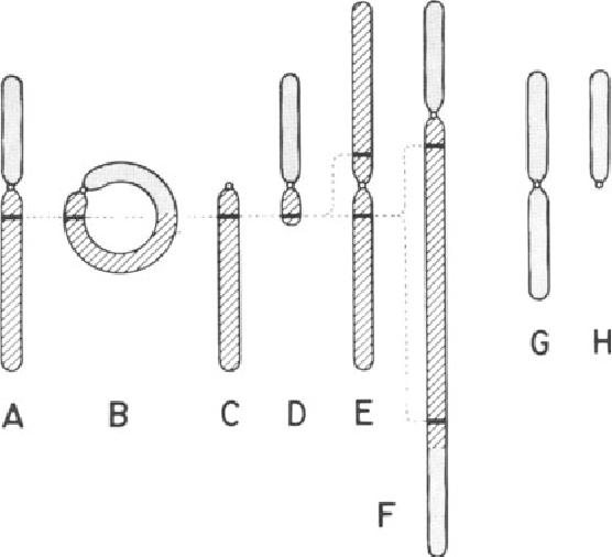figure XIII