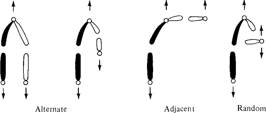figure XVI